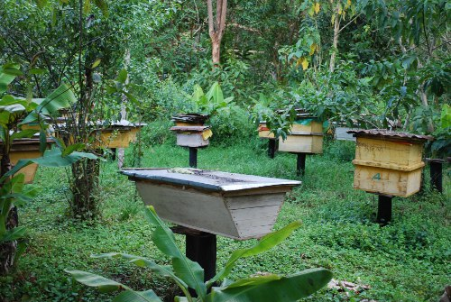 traditionelle nutzung von bienen in der region kafa thiopien. Black Bedroom Furniture Sets. Home Design Ideas